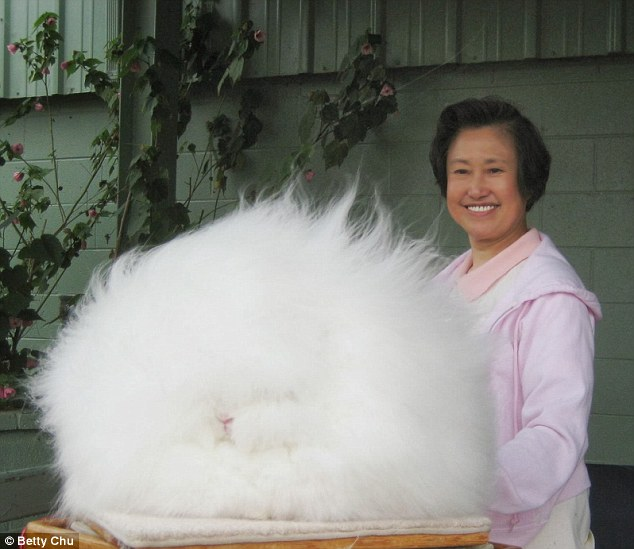 Rabbit: Betty Chu with Ida her Angora rabbit that boasts hair that grows in excess of 10 inches