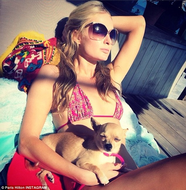 Summertime in Malibu: Chihuahua pup Peter Pan joined her on the beach for some afternoon bronzing, where he sat against her mid-section squinting into the bright sun