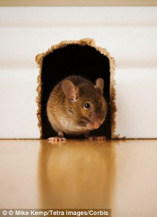 By studying an array of different animals, a team of researchers discovered that a creature¿s body mass and metabolic rate dictates how they experience the passing of time