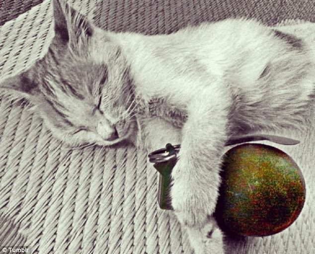 This grey cat, cuddled up to a grenade, was among many posted on Tumblr by the Dutch Jihadi fighter
