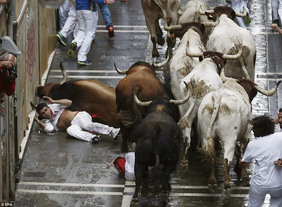 Danger: Two 'mozos' or runners fall in front of Fuente Ymbro's bulls on their way along the Estafeta stretch, in Pamplona, northern Spain