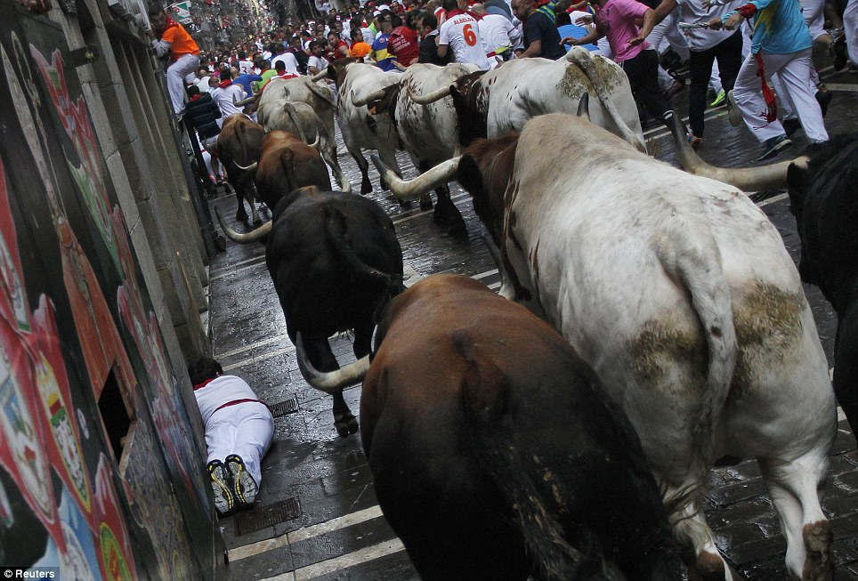 Man down: A man falls alongside the fighting bulls while running the 850-metre course from a holding pen to Pamplona's bull ring