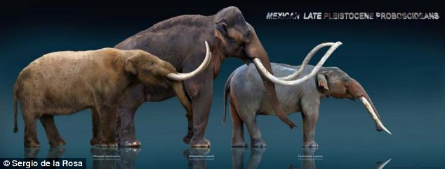 These sculptures, made by Mexican artist Sergio de la Rosa, show three elephant ancestors: (from left to right) the mastodon, the mammoth and the gomphothere. Archaeologists have discovered artifacts of the prehistoric Clovis culture mingled with the bones of two gomphotheres ¿ an ancient ancestor of the elephant ¿ at an archaeological site in northwestern Mexico.