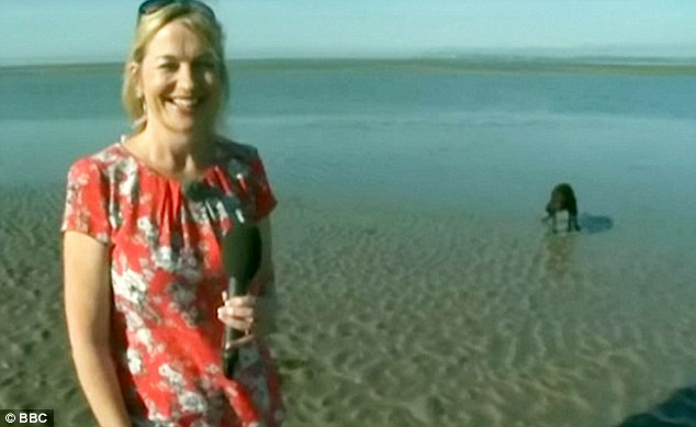 BBC Breakfast's Carol Kirkwood was broadcasting live from a beach this morning when the dog appeared