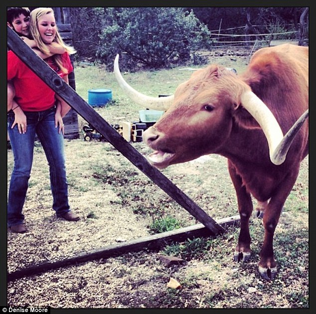 Doesn't like to be fenced in: Red the Longhorn has been known to jump over fences to get close to his human family