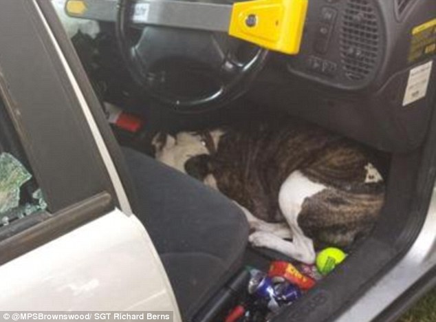 Desperate for water, the dog was captured cowering in the footwell on the driver's side of the car