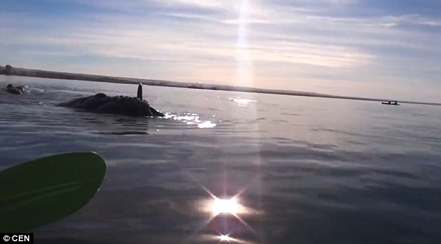 Water sight: The kayakers approach a group of whales, but they were in for a big surprise