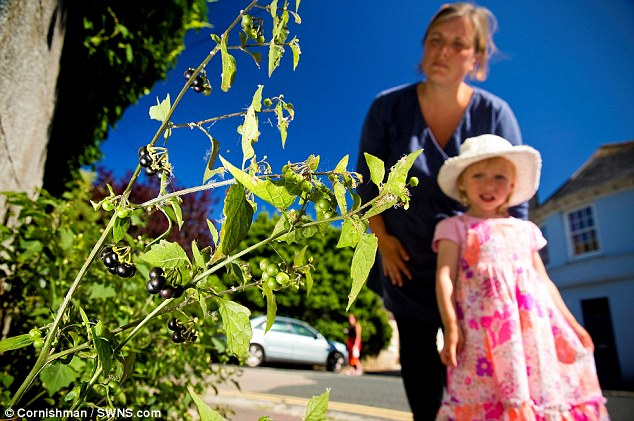Michelle Paine and daughter Serena Matthews with the nightshade they spotted growing in Penzance