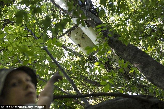 Vlad, 10, points out part of the wreckage of flight MH17 that fell into a tree near his family's home