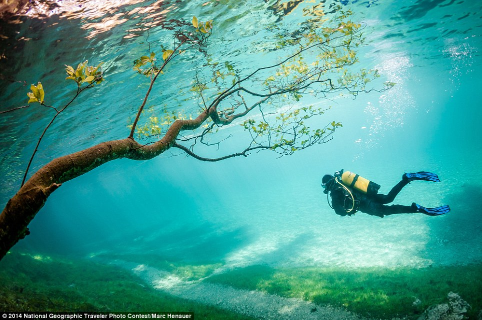 Diver in Magic Kingdom: Green Lake (Grüner See) is located Tragöss Austria. In spring snowmelt raises the lake level about 10 meters. This phenomenon, which lasts only a few weeks covering the hiking trails, meadows, trees. The result is magical to watch diving landscapes. Location: Grüner See at Tragöss, Austria (photo and caption by Marc Henauer)