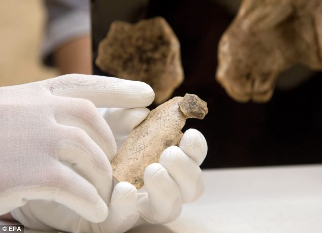 Reunited: Archaeologists from the University of Tübingen, Germany, found the ancient fragment of mammoth ivory belonging to the Ice Age animal figurine, which is now on show at the university's museum. IT is shown here re-attached to the rest of the figurine