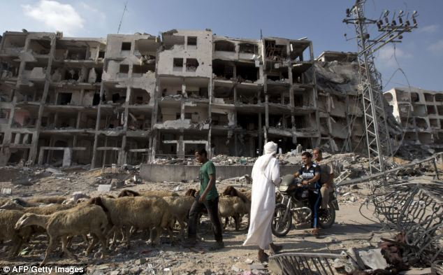 A Palestinian man leads a flock of sheep past destroyed buildings in Gaza, following the announcement of a 72-hour ceasefire
