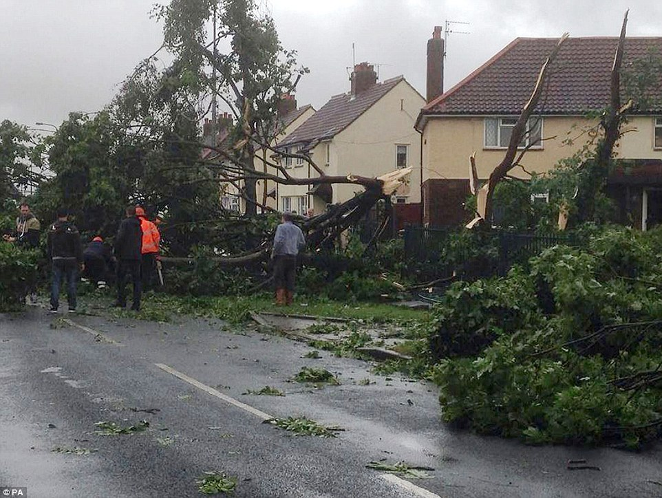 Surveying the damage: Trees that have been blown over in Hopewell Road in Hull, as the remnants of Hurricane Bertha swept across parts of the country