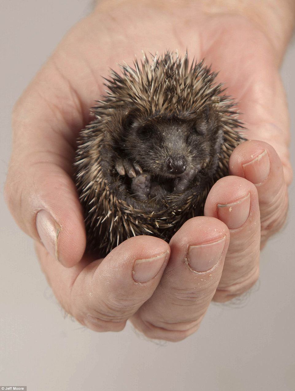 There are also fewer slugs and snails around while hardened soil makes it impossible for hedgehogs to scoop up worms lurking just under the surface