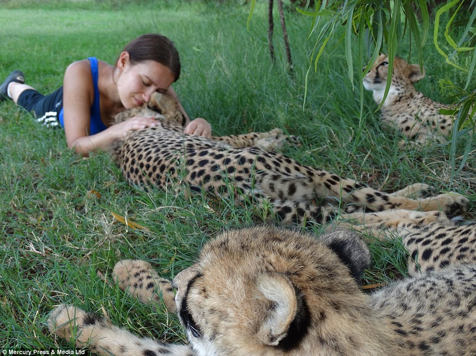 A passion and love for animals: Polish journalist Goska Zdziechowska looks so content as she snuggles up to beautiful cheetahs in the wild