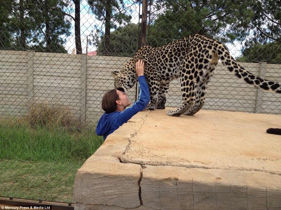 Magical photograph: Cheetah delicately plants a kiss on Goska's head