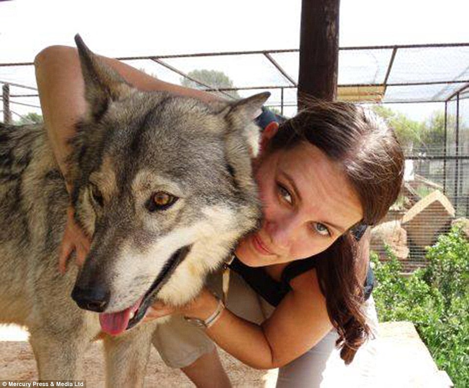Unafraid: Amazing photograph shows Goska Zdziechowska's incredible connection with animals including wolves, cheetahs and snakes