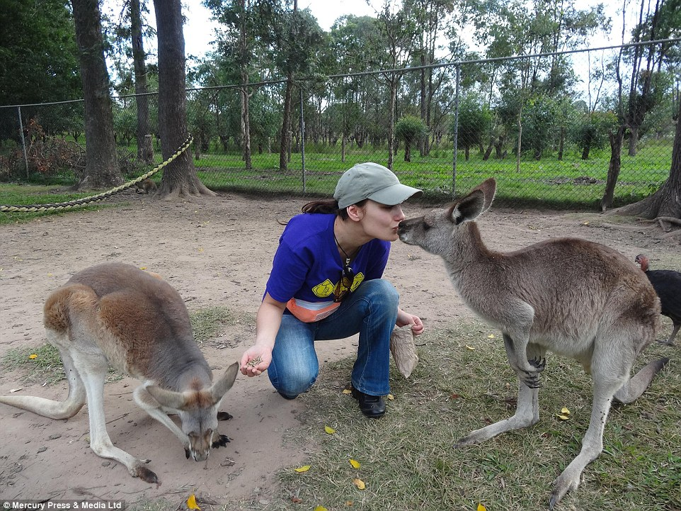 More kisses: A kangaroo shows its affection for Goska during feeding time