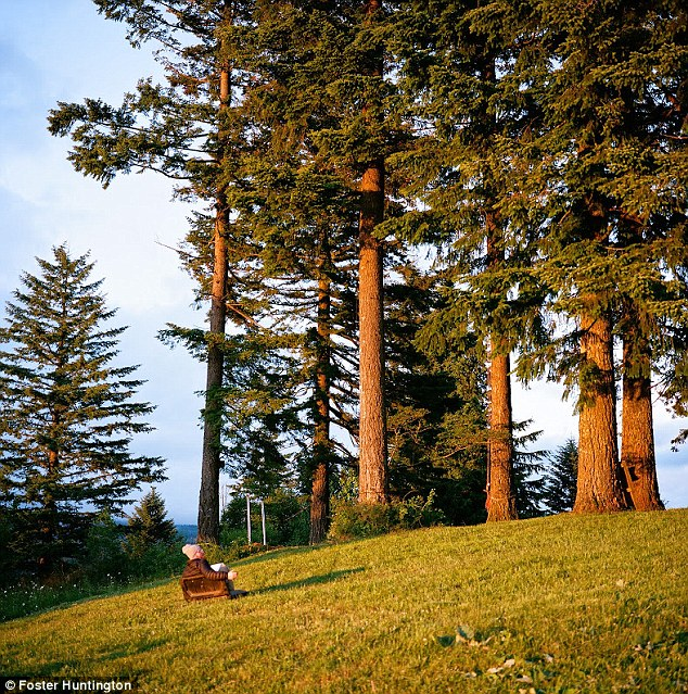 Once its finished, the tree house will be situated among these Oregon pines