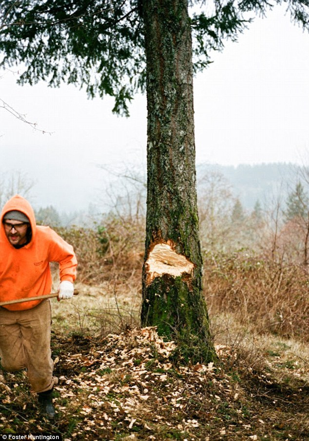 Timber: Chopping down trees is an important job