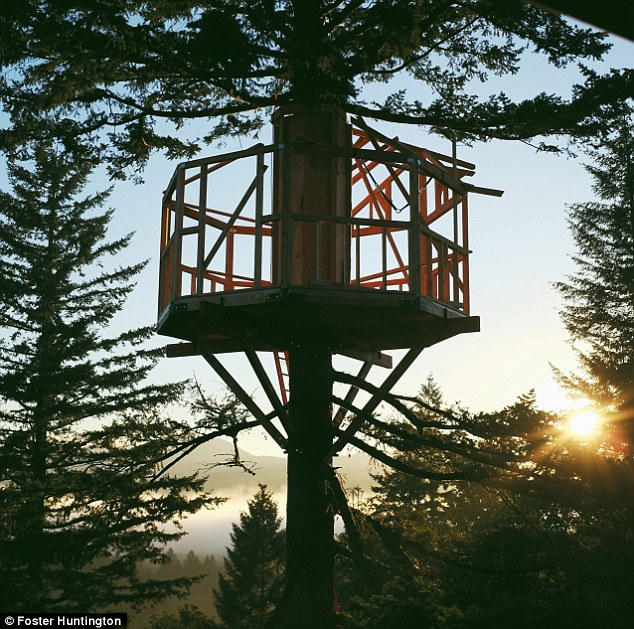 On its way: In a few months the tree house will be complete