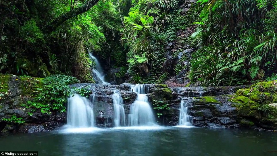 The serenity of a secluded rainforest makes an appearance as crystal clear water gushes down a waterfall