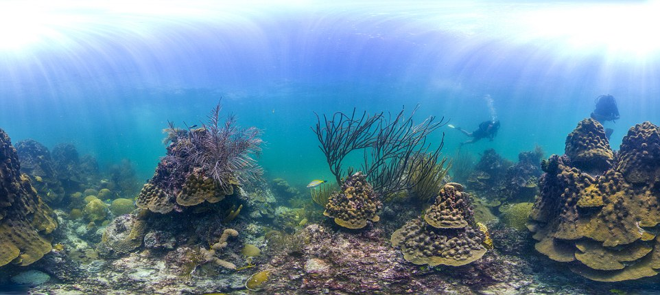 Under the sea: With more than 400,000 photos, Catlin Seaview Survey is creating a 'street view' of reefs around the world