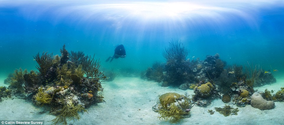 Catlin Seaview Survey and the National Oceanographic and Atmospheric Administration (NOAA) are mapping coral reefs in the US for the first time
