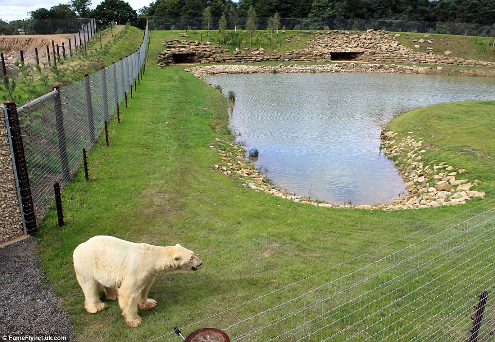 Home, sweet home: Yorkshire Wildlife Park will be moving in more bears in the autumn but have not released any further details yet