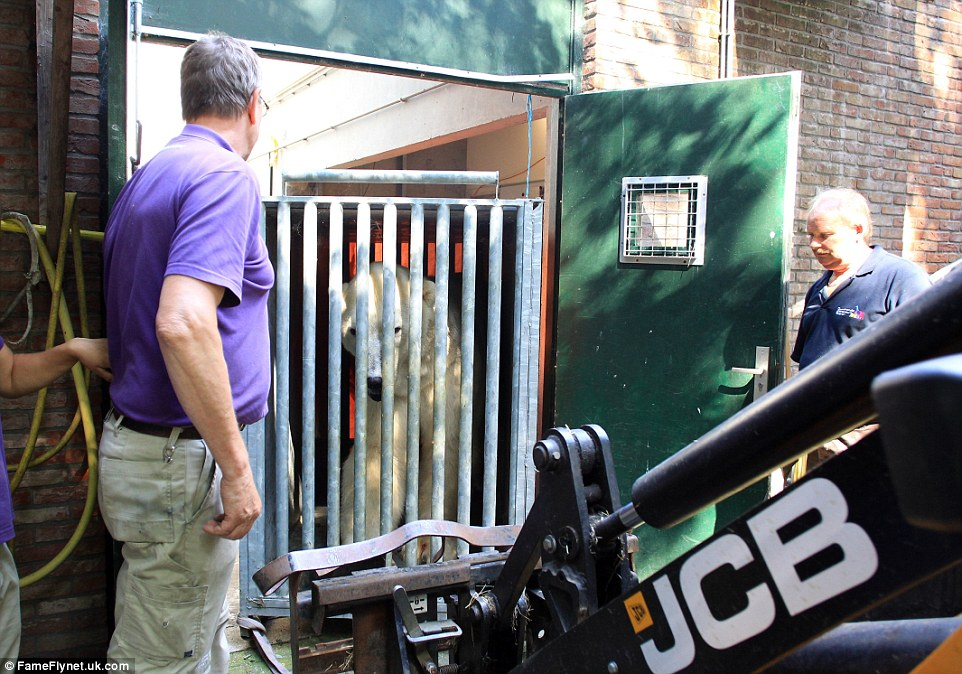Victor looked confused as to what the digger was before it was used to pick up his cage and place it in a waiting lorry
