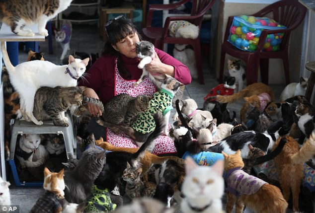 Maria Torero, 45, of Lima, Peru, has turned her two-story, eight room apartment into a feline hospice housing 175 patients and spends a staggering $1,785 a month on their care