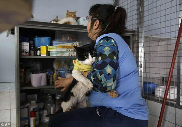 The nurse lovingly holds a sick cat as she reaches into her medicine cabinet