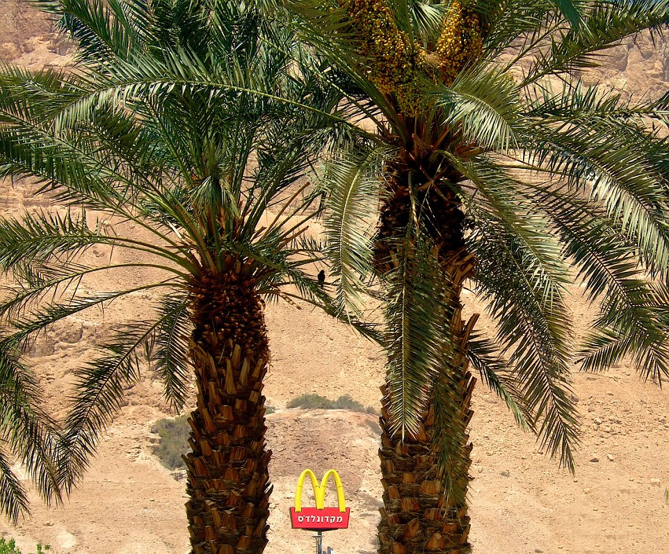 Mirage: Views of sand, sand and more sand is what greets diners at the Negev Desert branch in Israel that does brisk business with tourists passing through the desert on their way to Israel's resort towns