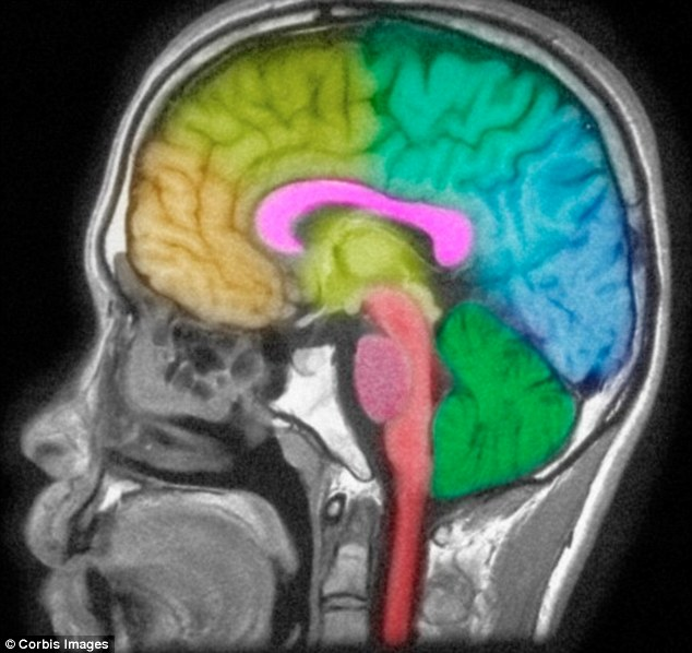 During normal brain development, a burst of synapse formation occurs in infancy, especially in the cortex - a region closely linked to autistic behaviour