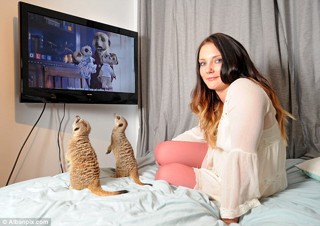 Kimmy Rudland, pictured, with her pet meerkats Lola and Lawrence love watching THAT ad on television
