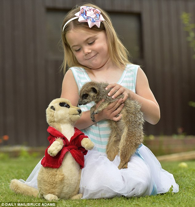 Ailisha Wade, with her pet Meerkat 'Mucky' at their home in Wythenshawe in Greater Manchester