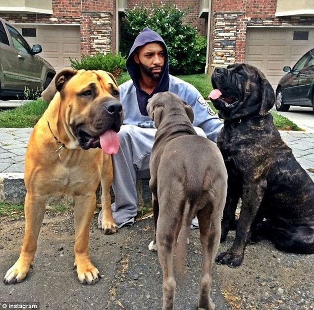 Under guard: The 33-year-old shared this image on Instagram of himself surrounded by a trio of massive dogs, writing in the caption that he was guarded, 'literally'