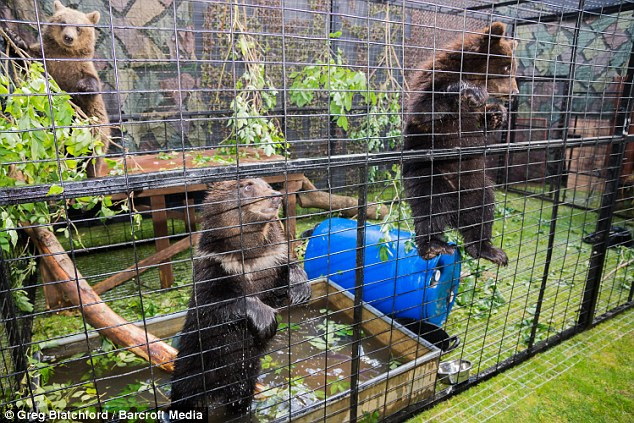 Performers: The bears were loaned by Amazing Animals, which trains pets for film, television and circuses
