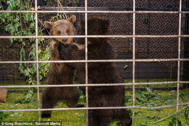 Defence: Organisers said the bears were there for education not for entertainment