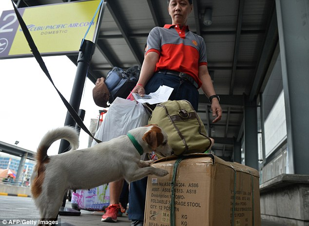 Extra security: A bomb-sniffing dog inspects a package at Ninoy Aquino International Airport in Manila