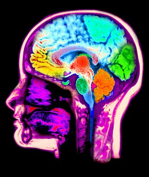 Drugs to increase brain capacity picture 3