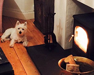 Jen's dog Fergie enjoying the wood burning stove she bought instead of replacing a 16-year old boiler