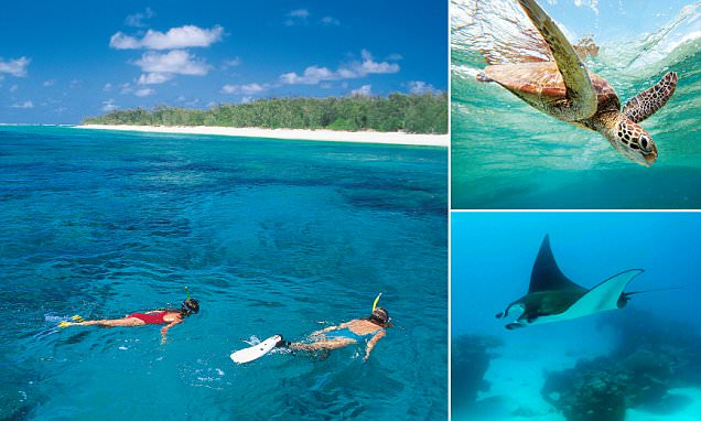 Reef encounter: Bump into friendly manta rays and lots of ...