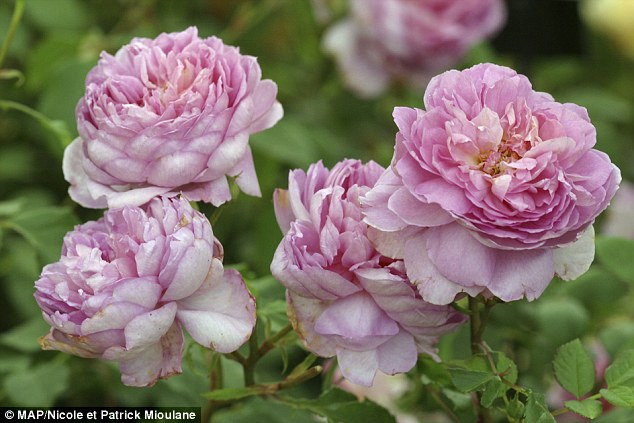 Impress your beloved with beautiful flowers all year round daily mail online - Flowers that bloom all year round ...