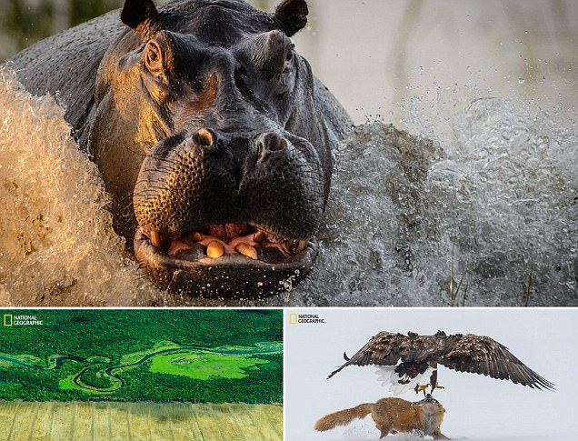 National Geographic's nature photographer of the year contest draws up stunning images