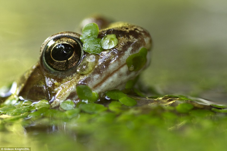 The contest also awarded junior photographers.  This shot of a common frog taken in East Sussex was the winner of the Deep and Meaningful category
