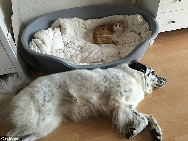 This cat just didn't care one bit and took over the dog bed - despite being tiny in comparison