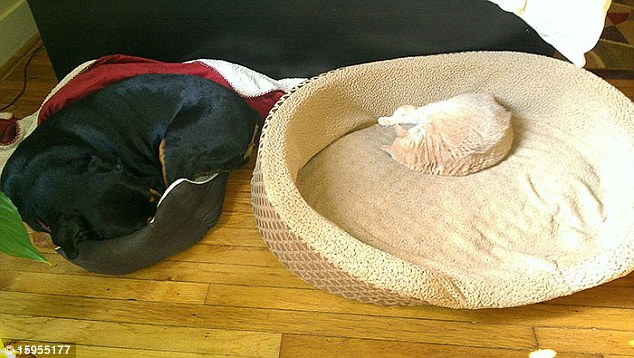 These household pets have had their roles reversed and swapped beds but it might be only working for one of them