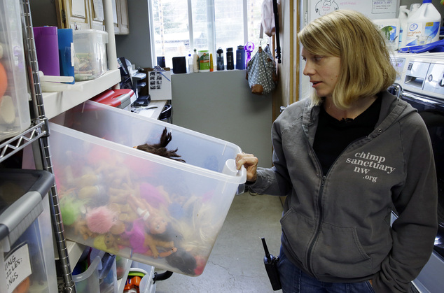 In this photo taken Aug. 8, 2016, Diana Goodrich, co-director of Chimpanzee Sanctuary Northwest, looks into a box of dolls and other toys used in enrichment ...