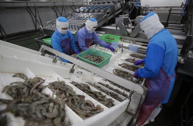 In this Aug. 23, 2016 photo, workers size shrimps at Thai Union factory in Samut Sakhon, Thailand. Facing international pressure for failing to stop human tr...
